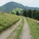 auf dem Weg zu den Urwäldern