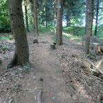 typischer Waldboden