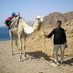Kamelausflug nach Ras Abu Gallum