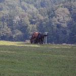 Pferde am Wegesrand