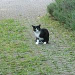Katze Felix