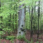 hübscher Baum