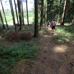 unebener Waldboden