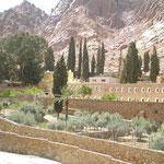 so grün ist es selten in der Sinai Wüste