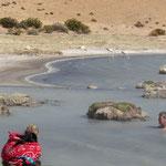 Bad in den Quellen - Flamingos im Hintergrund