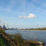 der Rhein ist auch in der Nähe