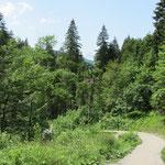 schöne Wälder