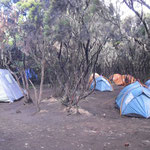 geschlafen wird wieder im Regenwald