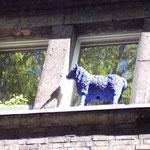 Schaf auf dem Dach