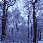 20 cm Neuschnee gab es in der Nacht