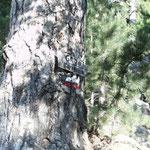 Hinweis im Wald
