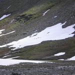 Rentiere auf dem Berghang