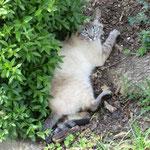 Katze in Achtel