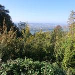 Ausblick zum Rhein