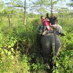 so sitzt man auf einem Elefanten