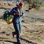 Homme se rendant à Collo avec un panier de légumes.