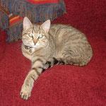 Willow eine super süsse Katze die leider vor unserem Haus überfahren wurde. Sie hatte nicht mal ein Jahr