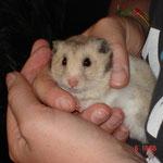 Indiana Jones ein Hamster der ein schönes Leben hatte.