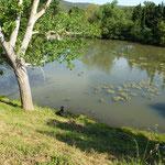Ententeich neben dem Campingplatz......und Newt lernte Enten jagen.....