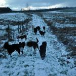 Spaziergang mit Hundis