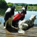 Bill Peggy & Zazou ( die Hunde von Marie meiner Nichte )