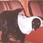 Blacky unser erster Hund eine Cocker Mischling Hündin