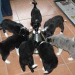 Die Bande beim Fressen