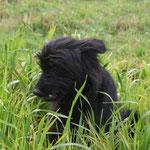 Sieht aus wie Gras......kann man das essen?