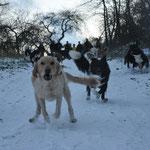 Alle 18 Hunde waren froh.....
