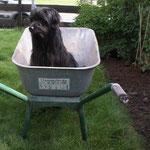 Newti hat bei der Gartenarbeit geholfen....