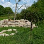 2014 errichtete Trockenmauer