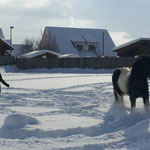 knapp 40cm Schnee im Winter 12/13