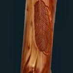 2.002 Einzelheit geschnitzte Feder
