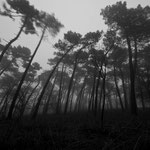Luca Cortese - Forest nightmare , 2013
