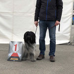 BOB in Chemnitz 13. April 2018: Celes Royal vom Herthasee