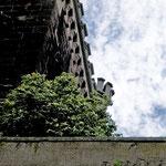 Tetradium daniellii, Samthaarige Stinkesche, Bereich C Brücke, Aufnahme-Datum: 20.07.2009
