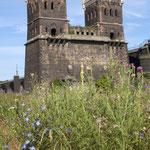 Artemisia vlgaris, Echium vulgare, Carduus acanthoides, Oenonthera spec,  Bereich  D Rheinaue,  Aufnahme-Datum:  n.b.
