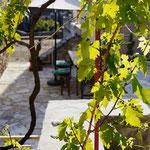 Blick zur großen Terrasse mit Weinblättern