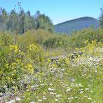 Wiesen am Hügel im Frühling