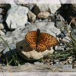 Schmetterling (Art-Nr. 003)