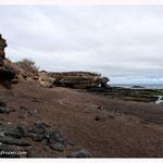 Galapagos (5573)