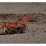 Krabbe (5842)