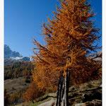 Herbst (Art-Nr. 6806)
