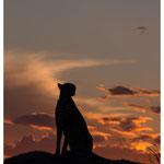 Gepard (Art.-Nr. 5884)