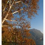 Lugano (Art-Nr. 6648)