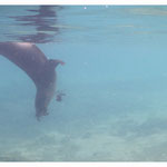 Sealion Art-Nr. 0545