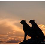 Gepard (Art.-Nr. 5806)