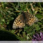 Schmetterling (Art-Nr. 002)