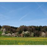 Frühling im Zürcher Oberland (6468)