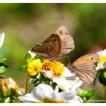 Schmetterlinge (Art.-Nr. 2058)